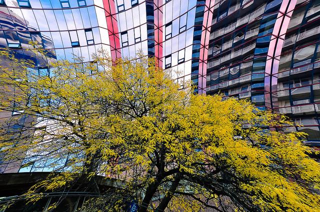 Toronto HIghrises - Paul Mennill