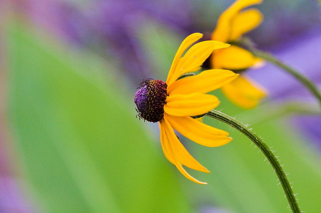 Yellow Flower by Jacqui