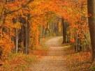 Fall Arbour - Karen Dumais