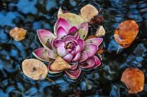 Floating Down an October Stream - Paul Mennill