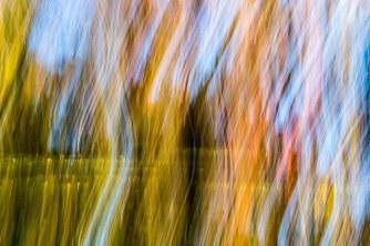 Motion - Eugene Pruski