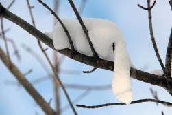 Snoozing Snowcat - Trixie Usselman